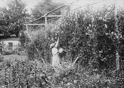 Mrs Douglas in the garden of Hockin House