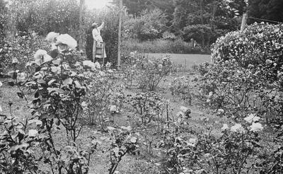 Mrs Douglas in garden at Hockin House
