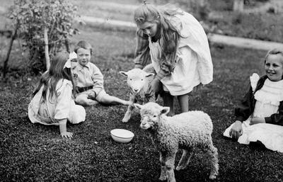 Douglas children feeding a pet lamb
