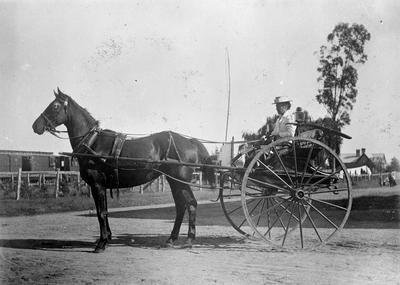 Mrs Douglas driving a 2 wheel buggy