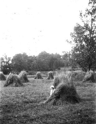 Haystacks at Waikato Hospital paddock near the Lake