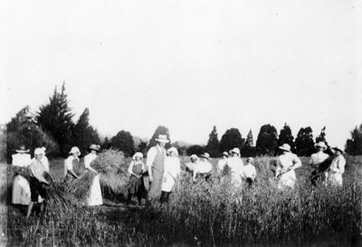 Dr Hugh Douglas and nurses cutting grass in Waikato Hospital paddock