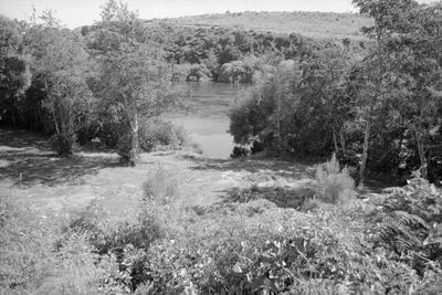 Waikato River near Hamilton Gardens