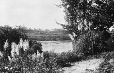 View of East bank of Waikato River, Hamilton