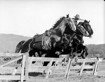 4th Waikato Mounted Regiment Military Sports, Rotorua
