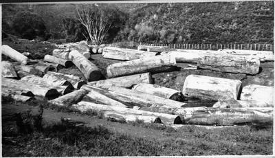 Kauri logs