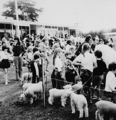 Tamahere School - Calf Club day