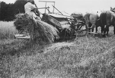 Cutting oats - Frank Hardys