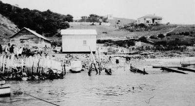 Port Waikato