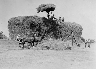 Duncan farm, haymaking