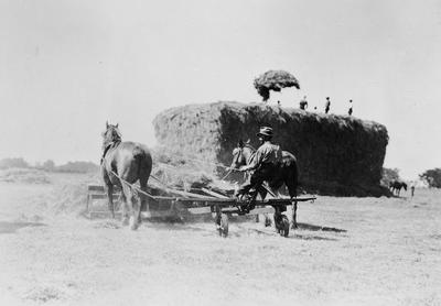 Duncan farm, haymaking