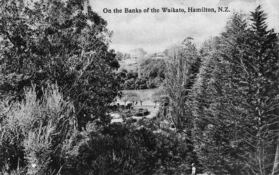 Waikato River bank, Hamilton