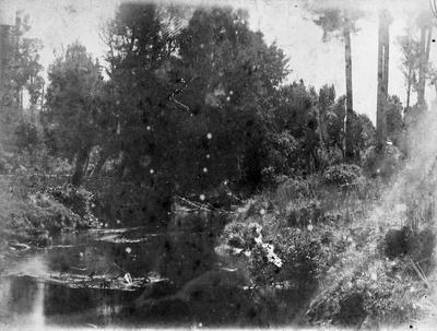 River scene below Te Kuiti