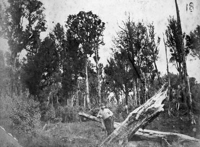 Bob Casher by the tree - Maraetaua