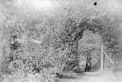 Scene in the garden, Hamilton