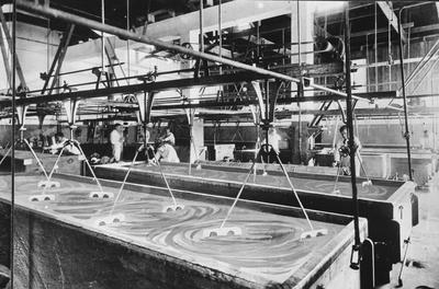 Cheese factory Matamata