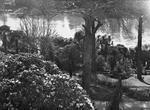 Hamilton Hotel gardens