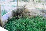 Hilldale - partridges