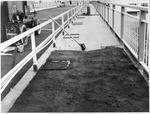 Claudelands rail bridge conversion