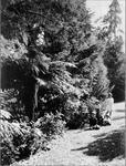 Bankwood Homestead - gardens and children