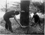 Felling a tree using a power saw