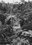 E A Butt and car in native bush